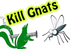 BREAKING NEWS: GNAT WAR ENDED–PEACE–IT IS A WONDERFUL THING.