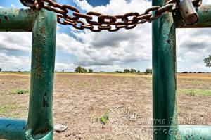 Through a Green Fence