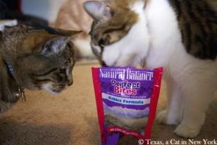 Texas a cat in New York, Natural Balance perfect bites, Natural Balance, BlogPaws