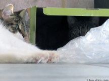 Texas, Kitshka and Milou playing with the fountain box | Texas, a cat in... Austin