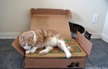 Litter One Review   Texas, a cat in... Austin