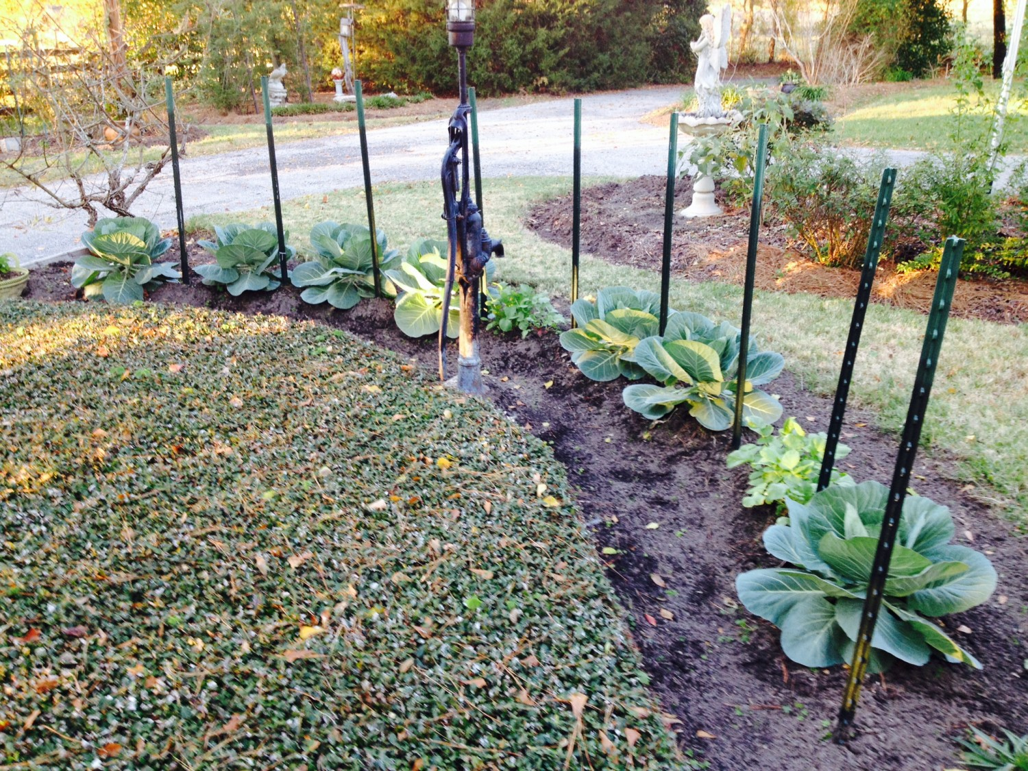 East Texas Winter Garden Vegetables