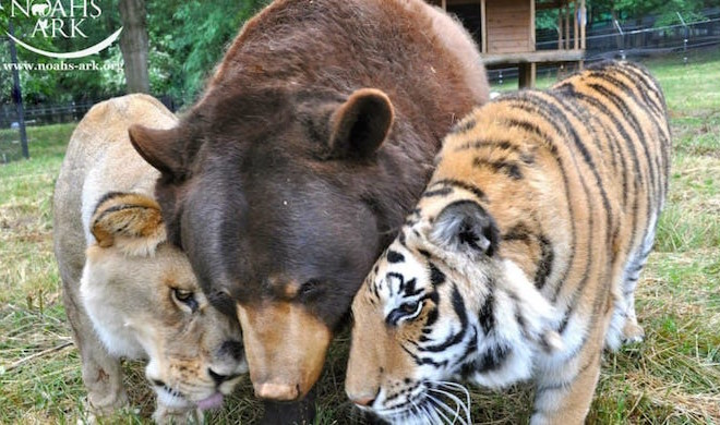 Image result for unlikely friends