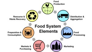 Local Foods System Diagram showing food production, distribution, processing through consumption and waste recovery.