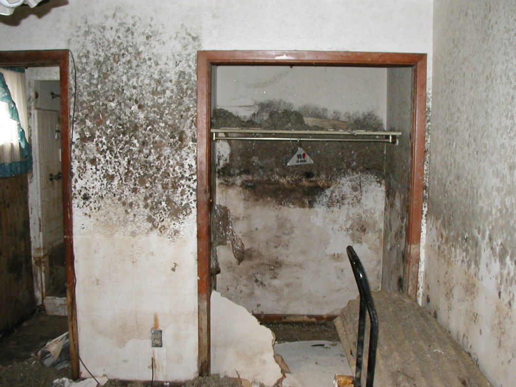 how to kill mould in a bedroom
