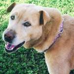 Texas Pet Company Arden Alida Security