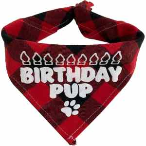 Texas Pet Co Dog Bandana Birthday Pup Neck Fold