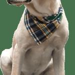 Texas Pet Co Dog Bandana Triangle Model Dog