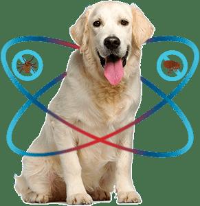 TexasPetCo Dog Image Flea Defender