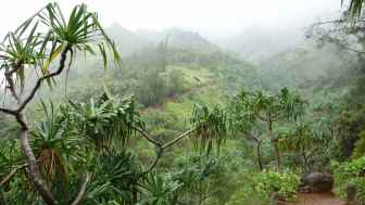 Fog in the Hanakapa'ia Valley. If you look closely, you can see the trail continuing on the other side.