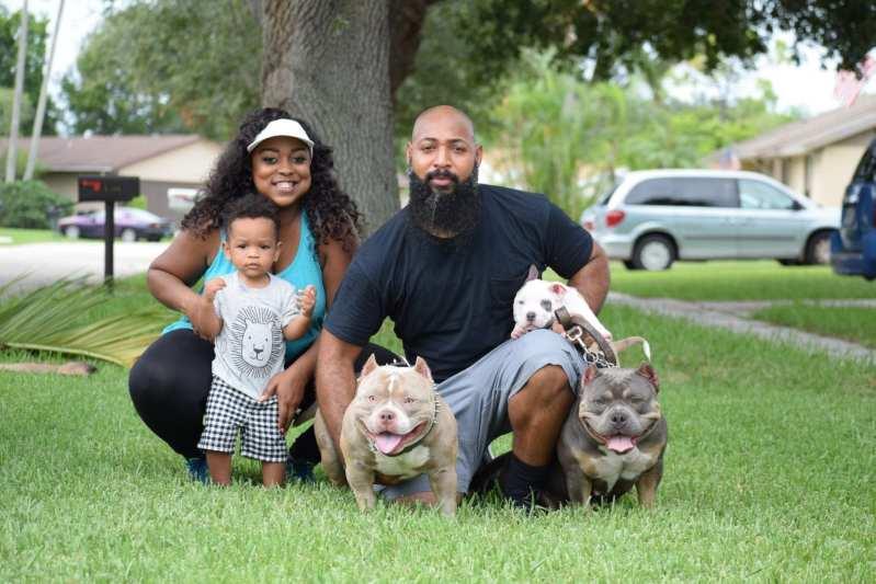 pocket bully breeders, Pocket Bully Breeder Venomline, Venomline | Texas Size Bullies