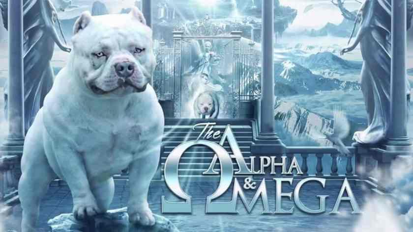 American Bully Stud | Top American Bully Breeders | Louis V Line's Omega