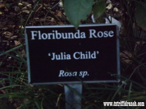 Julia Child rose sign