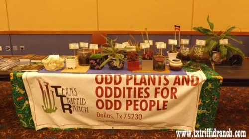 Triffid Ranch display