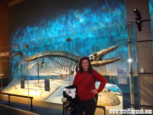 The Czarina and the Lake Heath mosasaur