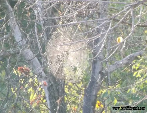 Spiderweb at creek