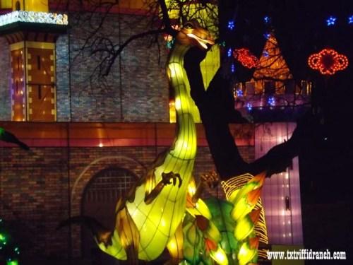 Chinese Lantern Festival - Dinosaurs