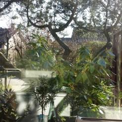 Blick aus Küche in Garten
