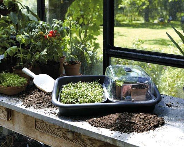 Αστικός Κήπος -  Από τη γλάστρα στο τραπέζι σας