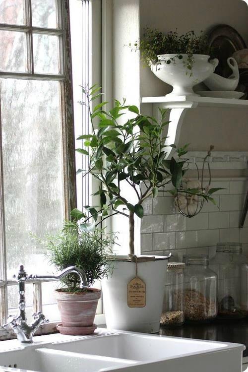 Πώς να διακοσμήσετε την κουζίνα σας με βότανα16