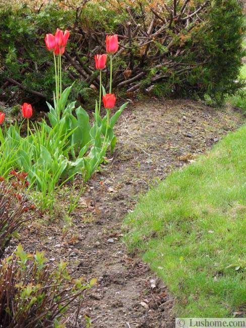 Ιδέες Σχεδιασμoύ κήπου με Τουλίπες15