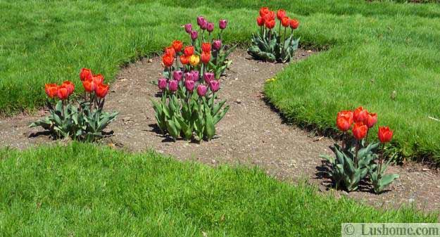 Ιδέες Σχεδιασμoύ κήπου με Τουλίπες18