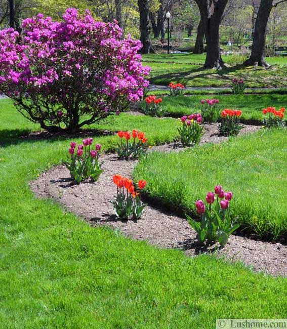 Ιδέες Σχεδιασμoύ κήπου με Τουλίπες4