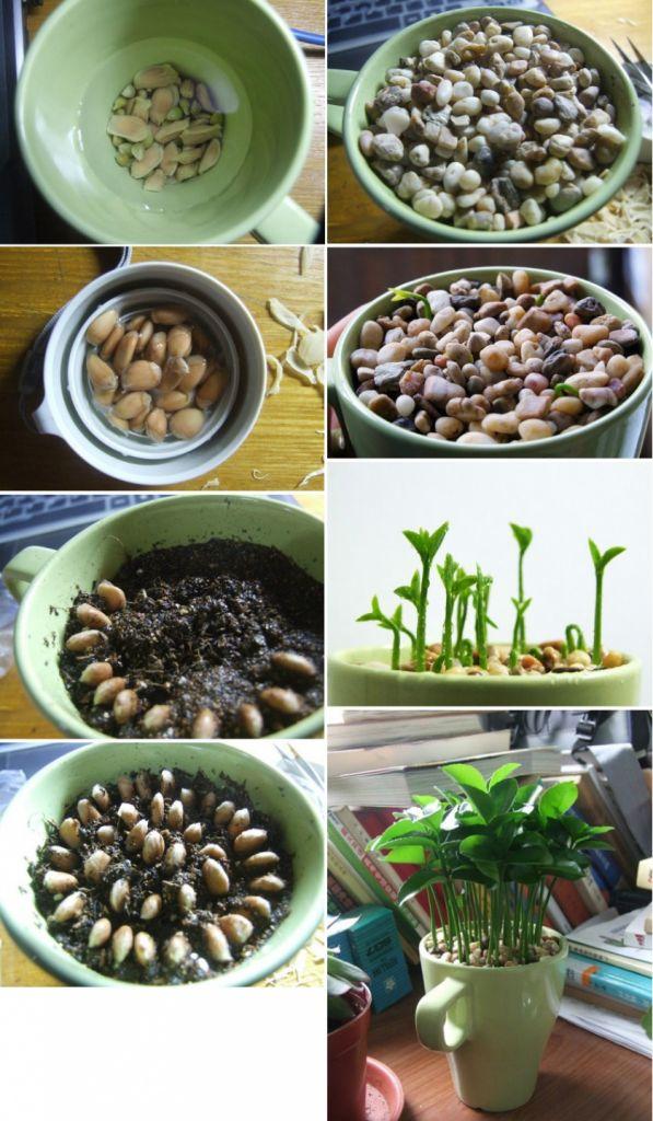 Ιδέες Εσωτερικής διακόσμησης με φυτά10