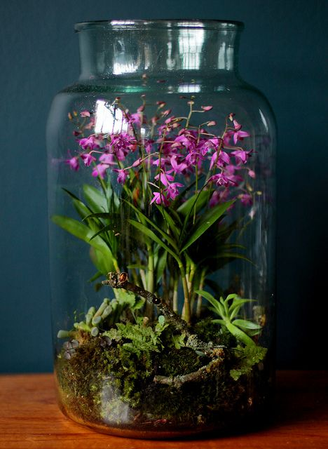 Ιδέες Εσωτερικής διακόσμησης με φυτά13