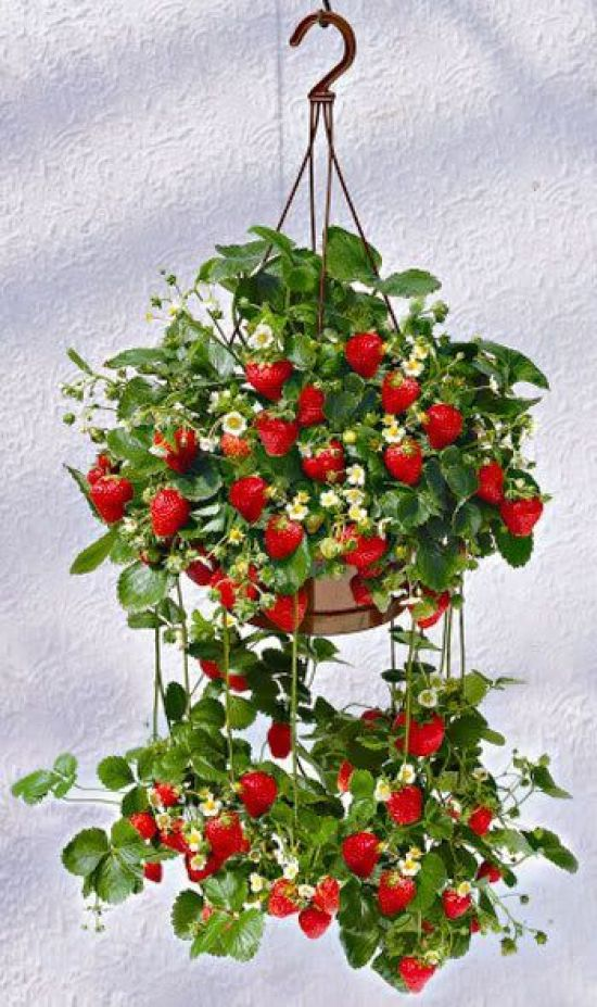 Ιδέες Εσωτερικής διακόσμησης με φυτά27