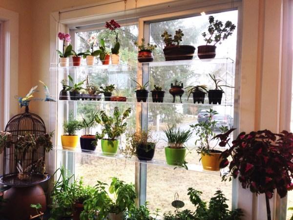 DIY Ιδέες Βότανο κήπων Παραθύρων για την κουζίνα σας1