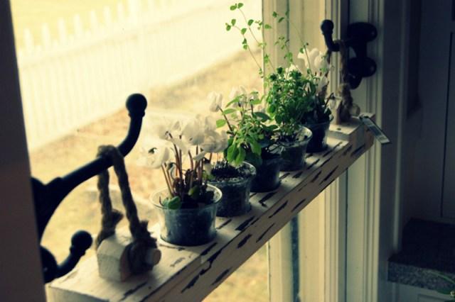 DIY Ιδέες Βότανο κήπων Παραθύρων για την κουζίνα σας8