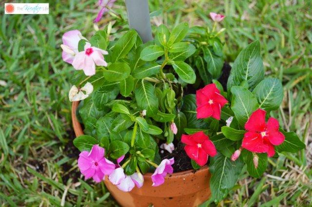 Απίθανο DIY σκίαστρο για την αυλή και τον κήπο σας8