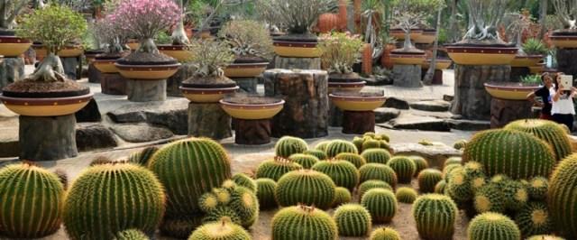 Κήποι με κάκτους24