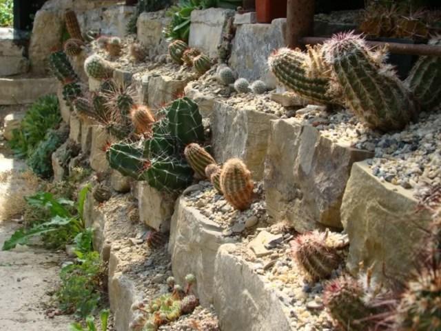 Κήποι με κάκτους38