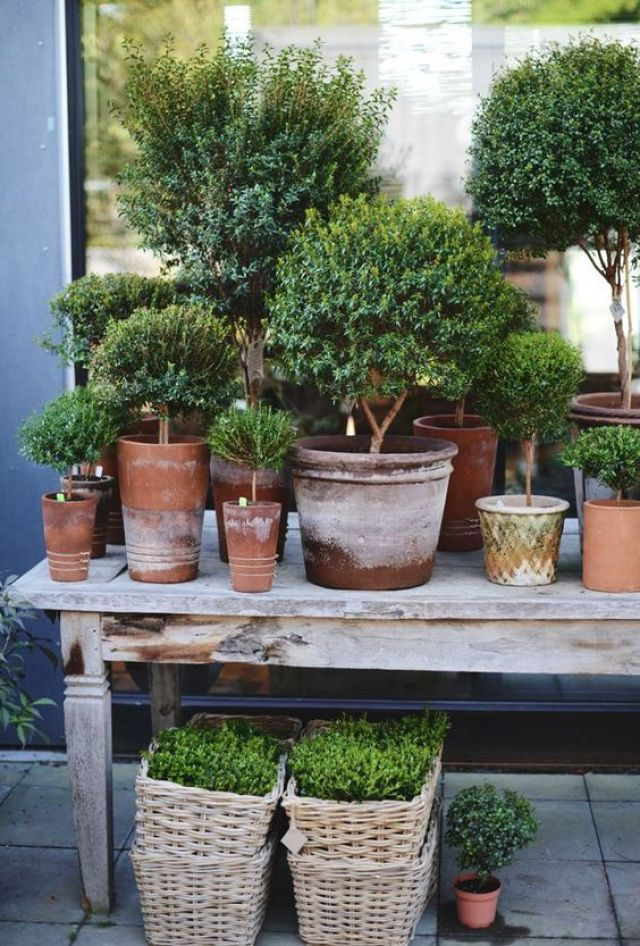 θεραπευτική γωνιά με φυτά13