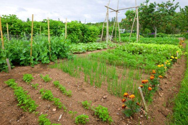 Ιδέες με Φανταστικούς λαχανόκηπους10