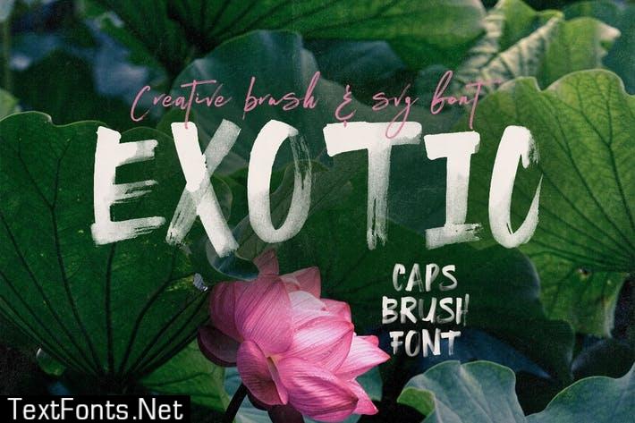 Exotic Brush & SVG Font