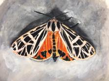 'Parthenice Tiger Moth', Painting