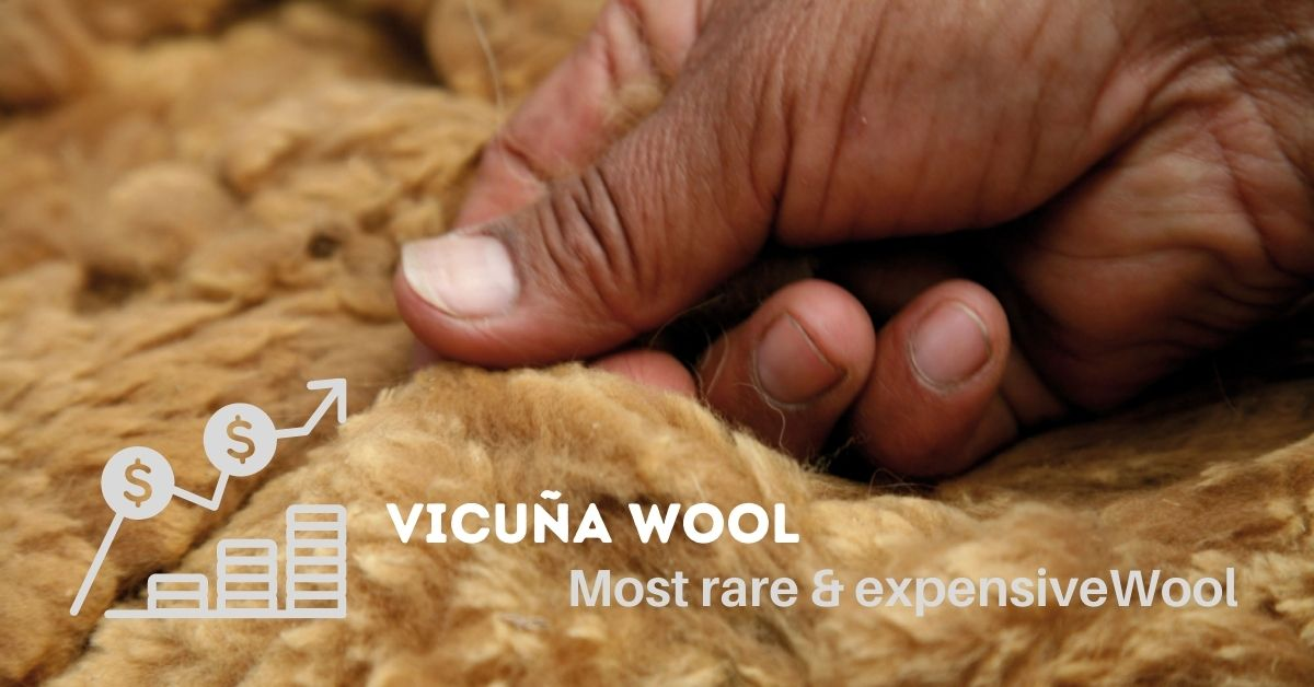 Vicuña Wool is the Most Rare and Expensive wool