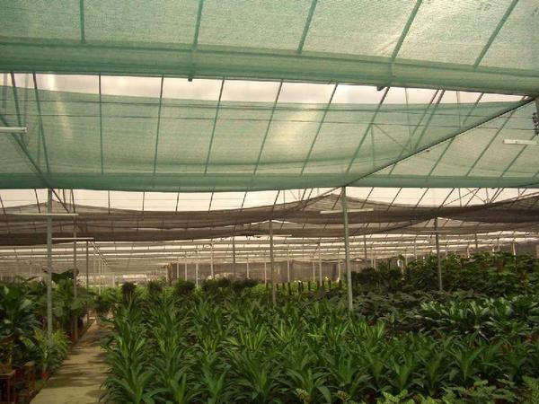 Sunscreen net