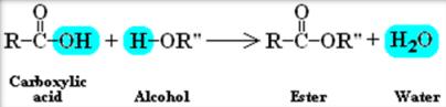 Ester molecule