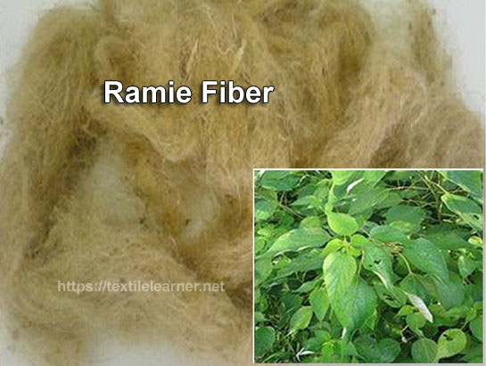 Ramie Fiber