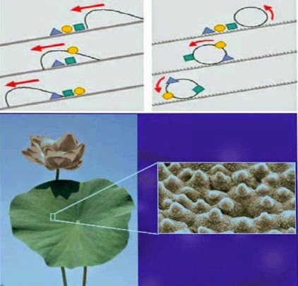 Lotus leaf effect and SEM imagery