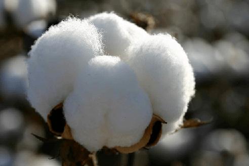 cotton fiber properties