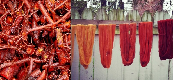 Madder roots and dyed sample