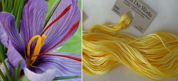 Saffron plant and dyed hank