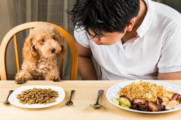 Аллергия на корм у собак: симптомы и лечение. Чем лучше кормить собаку