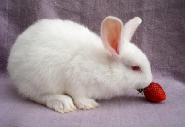 Можно ли давать кроликам огурцы и кабачки?