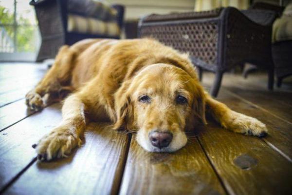 Почему собака не ест сухой корм и как ее приучить?